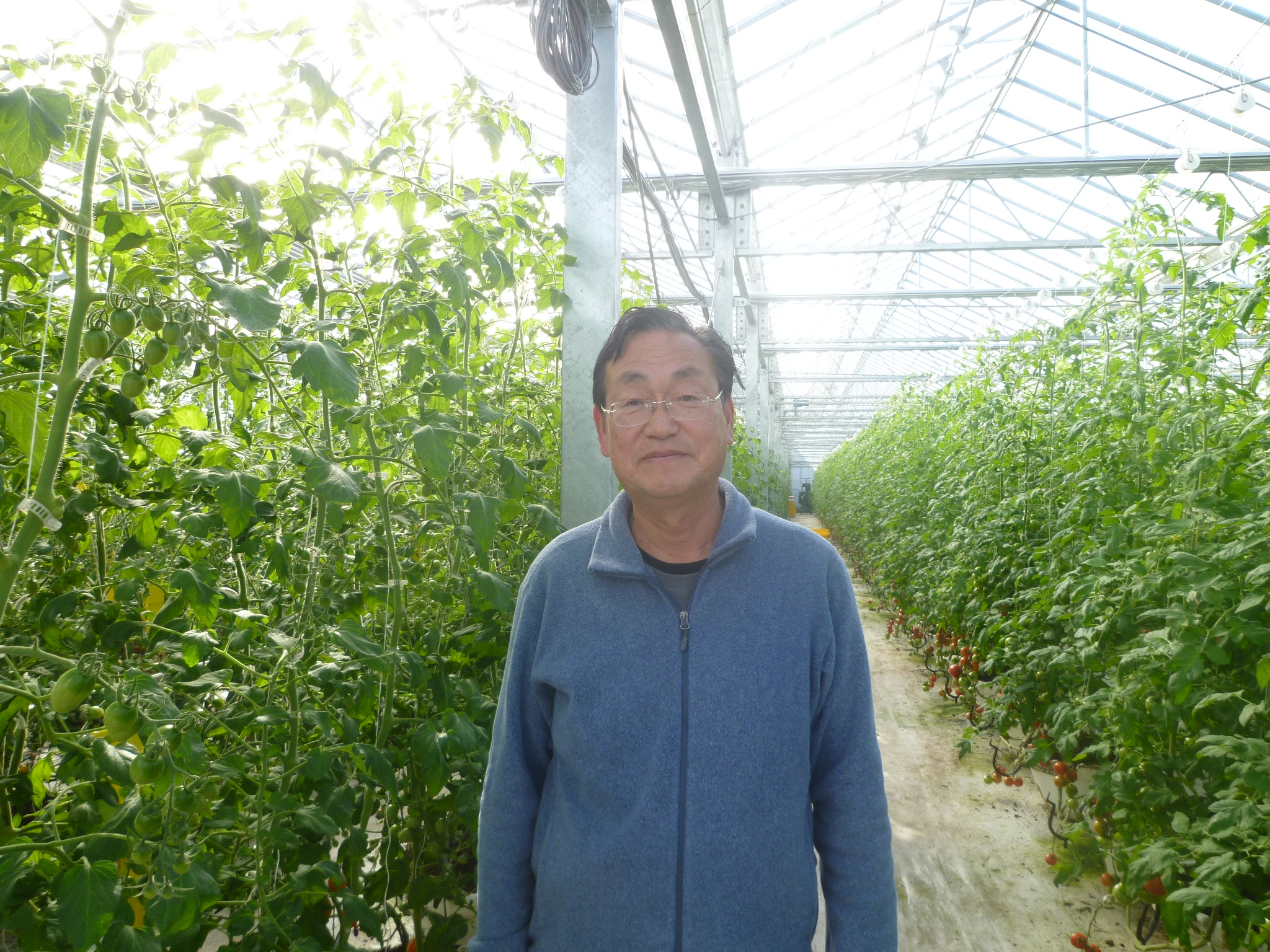 カラフルミニトマト圃場訪問