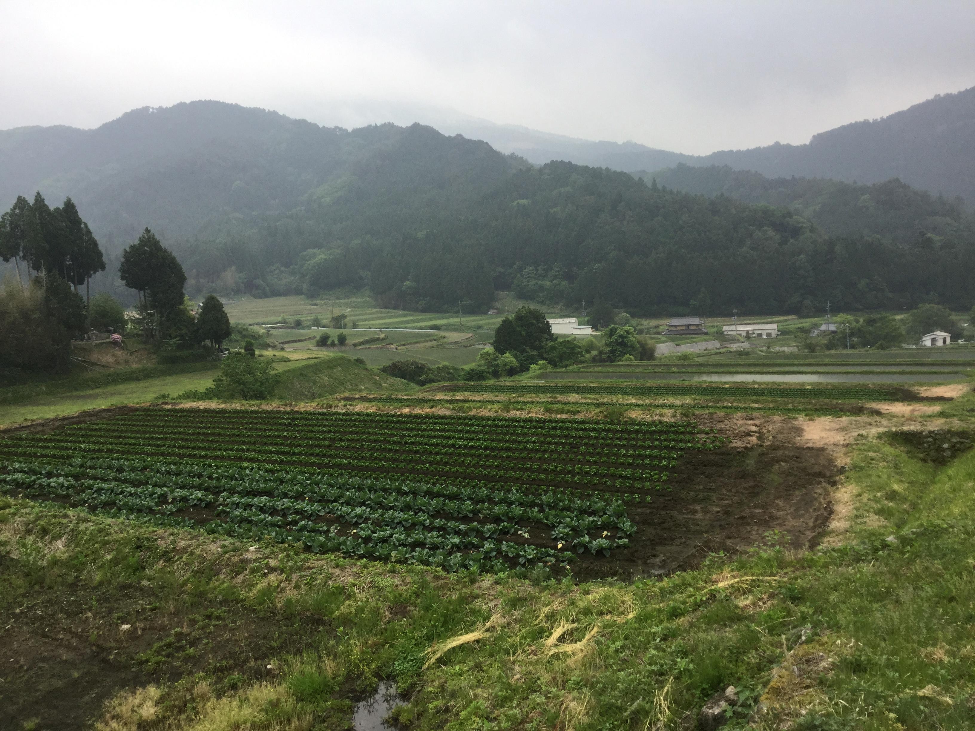 岡山県美作市  成大農場訪問(キャベツ)
