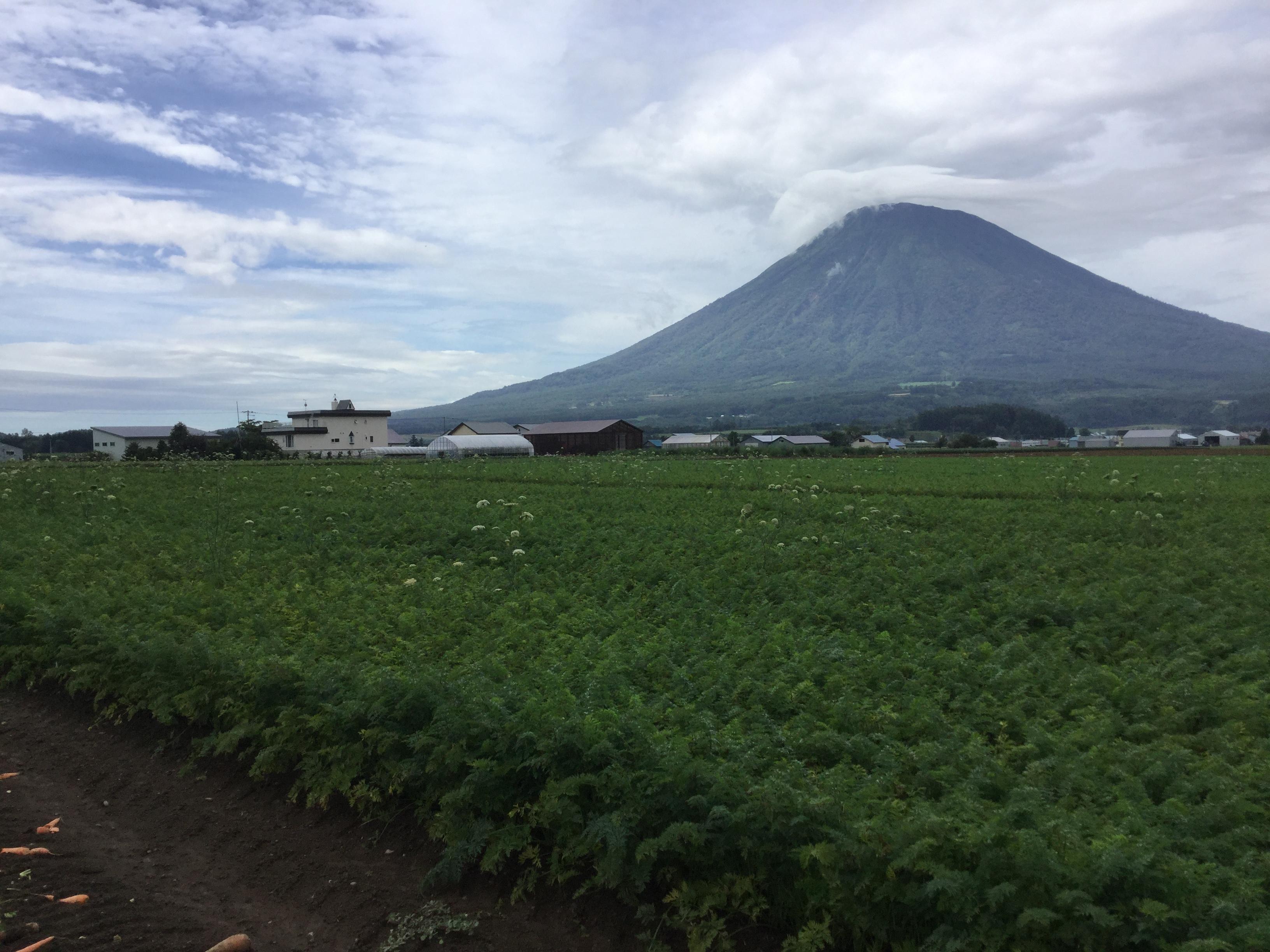 北海道 JA羊蹄訪問(にんじん)